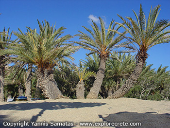 Vai The Palm Forest Of Vai In Crete