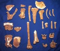 σκελετός μιικρού παιδιού που βρέθηκε στο σπήλαιο στα Ζωνιανά
