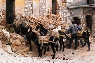 donkeys in Crete, Greece, traditional life